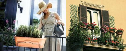 cuidar las plantas en el balcón