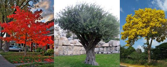elegir árboles según su color