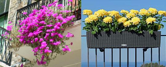 elegir las plantas para el balcón
