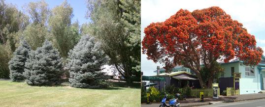 elegir los árboles según se forma