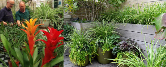 elegir plantas para un jardín tropical