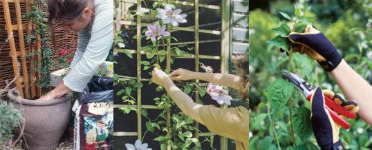 mantener y cuidar plantas trepadoras