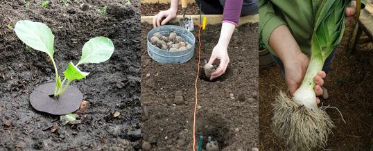 plantar hortalizas según el mes