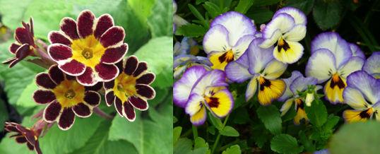 tener flores de jardín de invierno