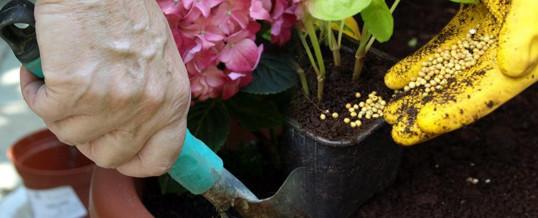 usar abono en tu jardín