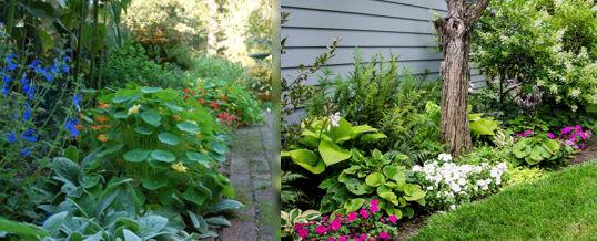 diseñar jardines con poco sol