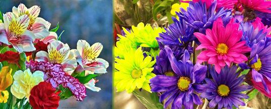 elegir flores según su color