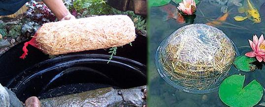 limpiar un estanque con cebada