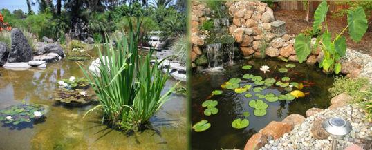 plantas acuáticas para el estanque