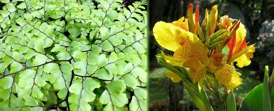 plantas para climas húmedos