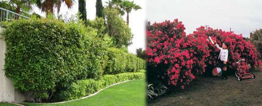 Jardines con arbustos jardines con arbustos with jardines con arbustos perfect crabapple with - Arbustos de jardin ...