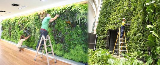 mantenimiento de jardines verticales