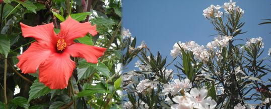 plantas de crecimiento rápido