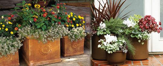 plantas par un jardín de macetas