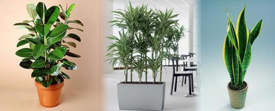 plantas que limpian ambientes