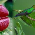 flor del beso